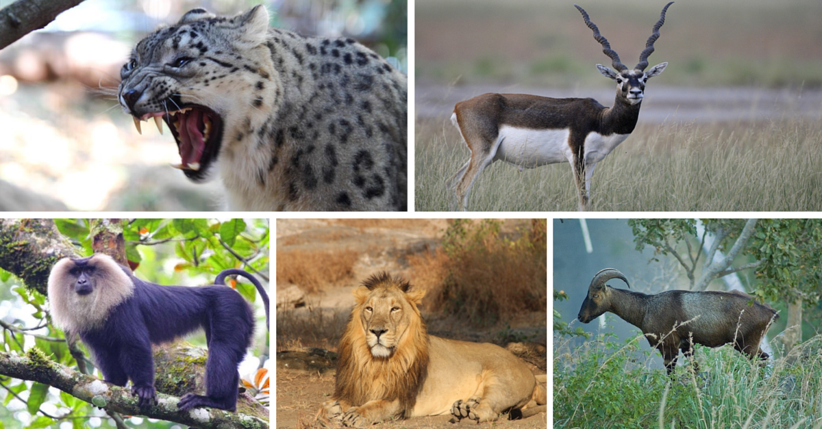 Rare and Exotic Animals That Can be Found in India - Trip ...