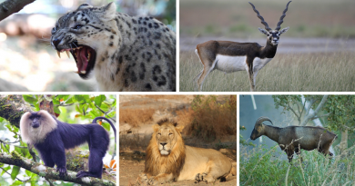 Rare and Exotic Animals that can be found in India