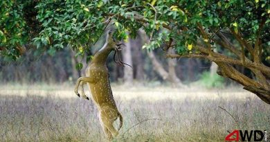 wild life tour packages india