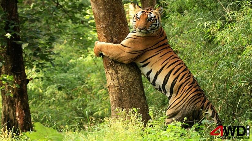 wild life tours india